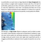 Pagina del libro Pianeta Acqua - Radiazioni luce in acqua